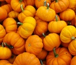 all about pumkins
