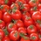 Time_for_tomatoes_PS