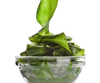 Algae and seaweed PS
