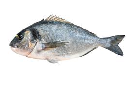 Salt water fish - Sea bream