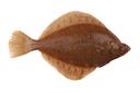 Flounder/plaice