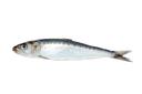 Sardine/anchovies