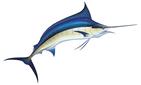 Marlin/swordfish