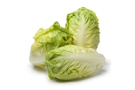 Lettuce, salad - Gem lettuce