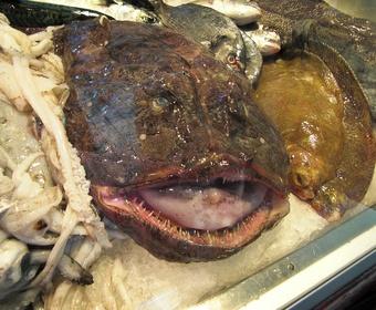 monkfish angler fish PS
