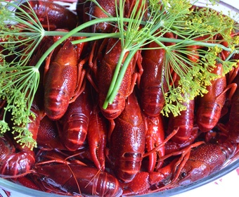 Swedish style crayfish party PS