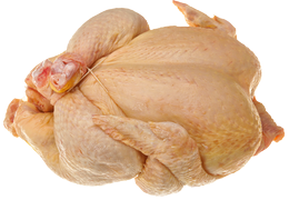 Poultry - Tuppkyckling