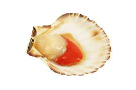Shellfish - Scallops