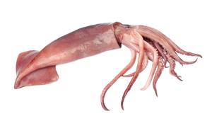 Shellfish - Squid