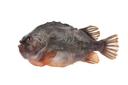 Lumpfish