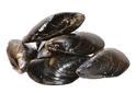 Blue mussels