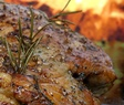 leg of lamb detail PS
