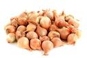 Onion (stk)