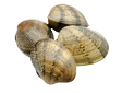 Clams/vongole