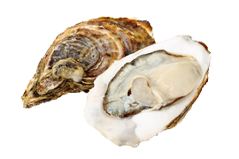 Shellfish - Oysters