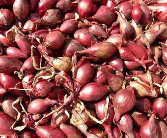 Onions PS