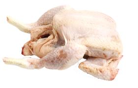Poultry - Hen