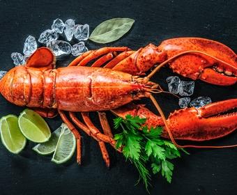 Lobster shellfish PS