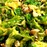kale cooking trends