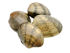 Shellfish - Clams/vongole